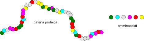 lade lineari aminoacidi abc di biochimica project invictus