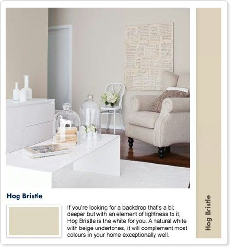 1000 images about hog bristle on dulux paint strength and usa