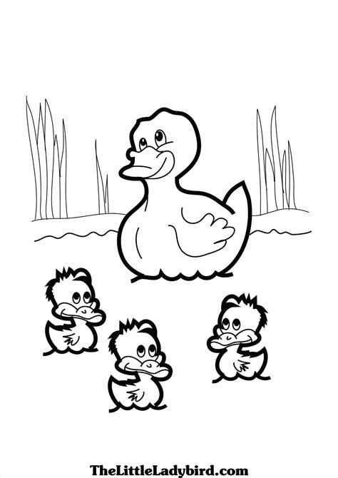 anaheim ducks coloring page duck coloring pages donald paginone grig3 org