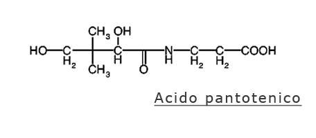 acido pantotenico alimenti acido pantotenico vitamina b5 carenza sintomi e soluzioni