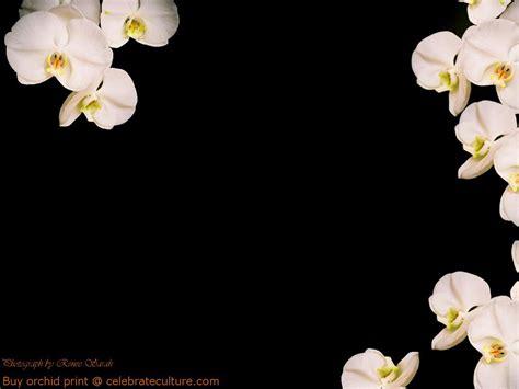 black and white orchid wallpaper black orchid wallpaper wallpapersafari