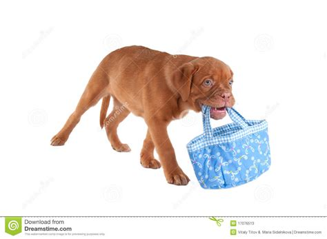 carrying puppy carrying a bag stock photos image 17076513