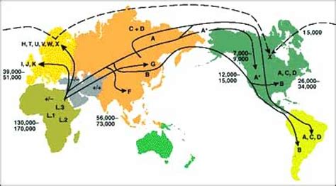 migration pattern meaning in hindi human migration patterns pattern collections