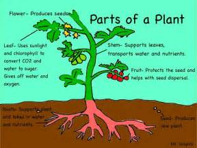 all about plants let s have fun