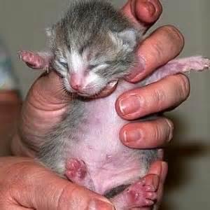 Formula Bayi Kucing Tips Memelihara Anak Kucing Si Lucu Beraksi