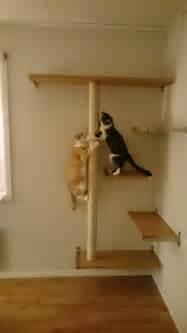 cat shelves for walls best 25 cat shelves ideas on diy cat shelves