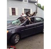 Moose Car Crash Incredible Pictures Show What Happens When A Maine