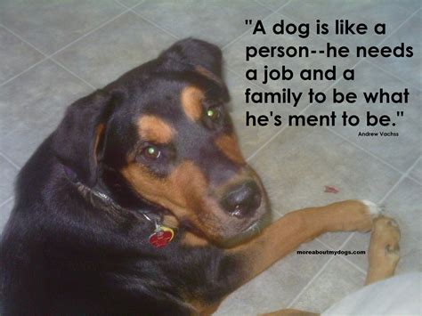 puppy pictures with sayings quotes about dogs loyalty quotesgram