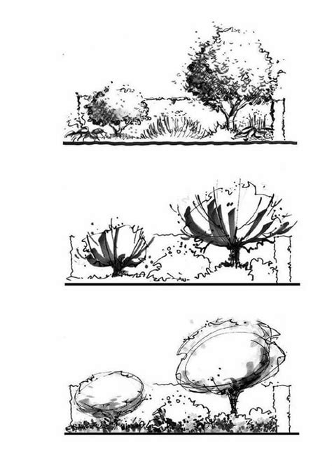 landscape architecture tree drawings interior design