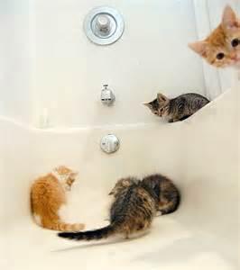 kittens in bathtub bathtub investigation