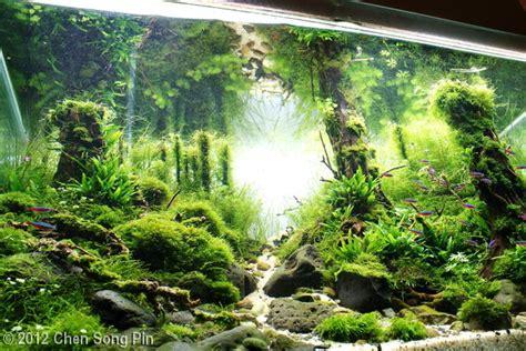 mossy square salah satu aquascape favorit