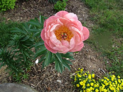 what grows there hugh conlon horticulturalist professor lecturer and gardener