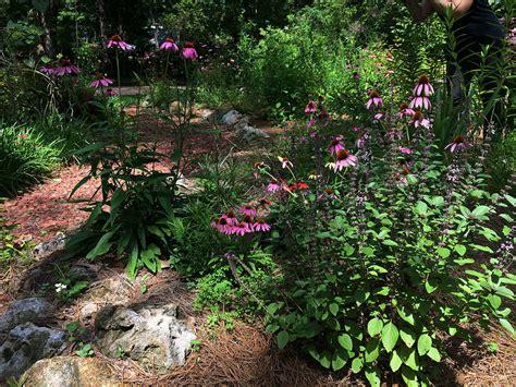 backyard butterfly garden butterfly gardens