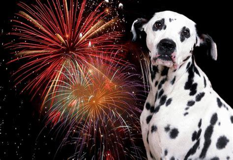 afraid of fireworks firework free saturday nov 5th unleashed care worthing unleashed