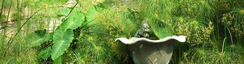 giardini hambury orari e tariffe giardini botanici hanbury