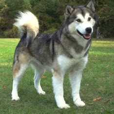 do dogs their name breeds types of dogs american kennel club