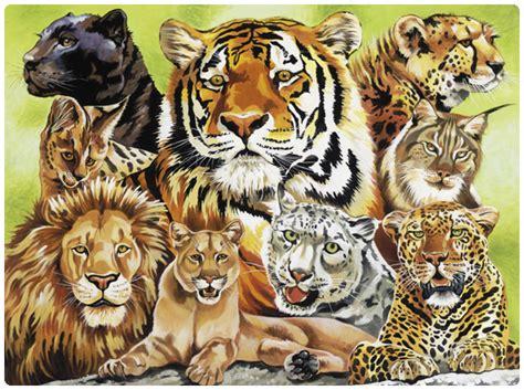 imagenes de tigres y leones juntos felinos