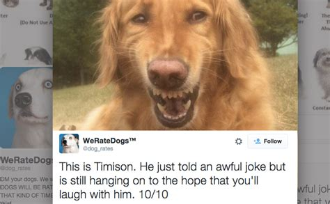 dogs rate this account that rates dogs is seriously the best thing barkpost