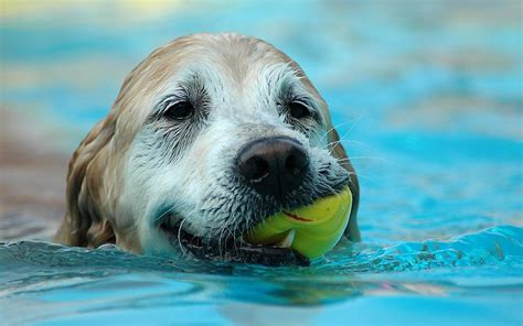 puppies in water picture of with in water hd animals wallpapers
