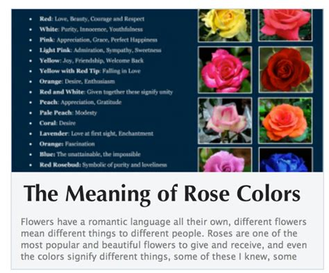 roses colors meaning color meanings colors meanings
