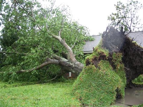 the home inspector herald tree damage trim your risk