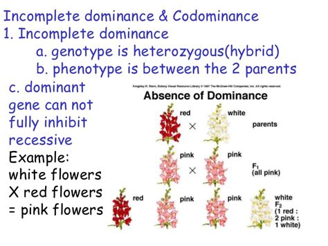 exle of codominance explained with exles