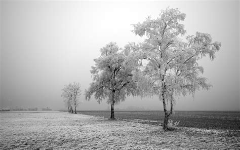 grey nature wallpaper winter snow pictures wallpaper 1600x1200 81021