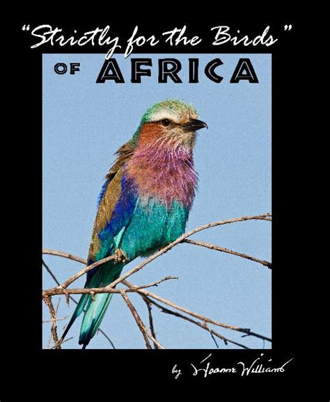 birds live africa image search results