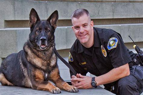 police dog 10 best police dog breeds world s best guard dogs