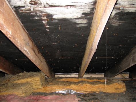 Black Mold In Attic - attic mold remediation experts attic black mold removal nh