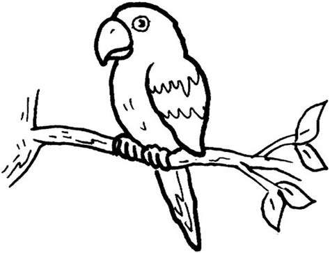 get this online parrot coloring pages 88275