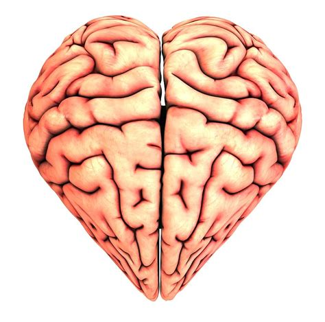 heart and brain an heart shaped brain conceptual artwork photograph by pasieka
