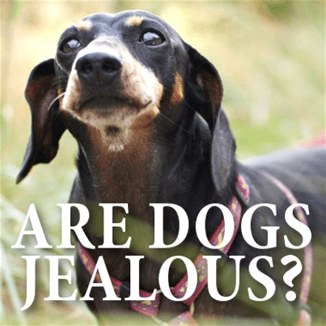 do dogs get jealous the doctors do dogs get jealous tips for eyebrows