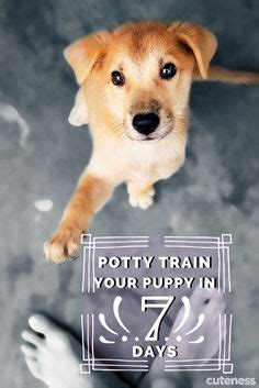 how to potty a yorkie puppy outside 1000 images about pets on yorkie yorkies and terrier