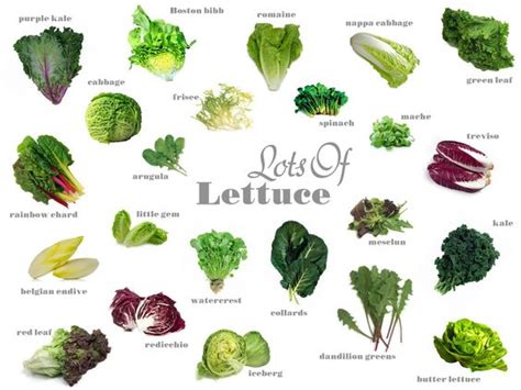 types of lettuce with pictures and names google search
