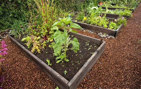 4 tips for growing a healthy northwest vegetable garden
