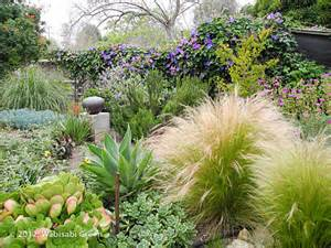 drought tolerant gardens with purple hues on pinterest