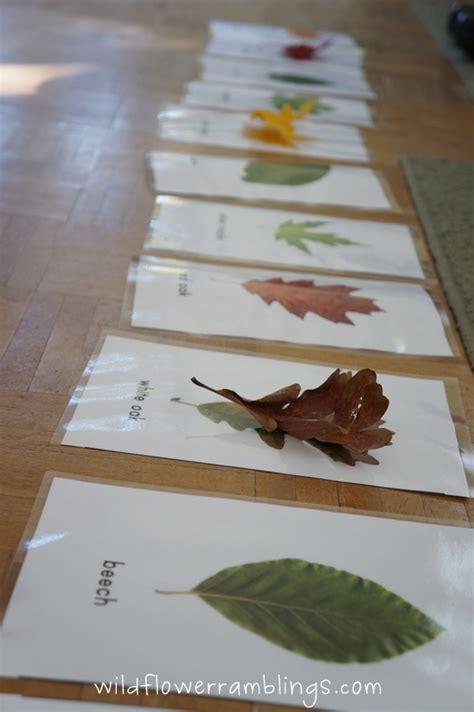 printable leaves for sorting leaf identification cards free printable wildflower