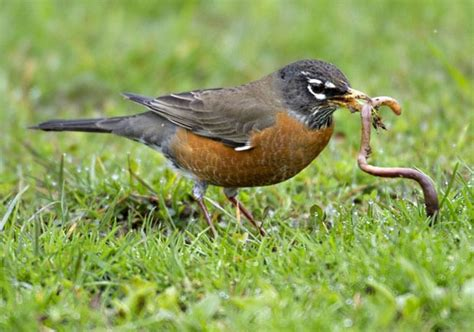 bird worm rachael edwards