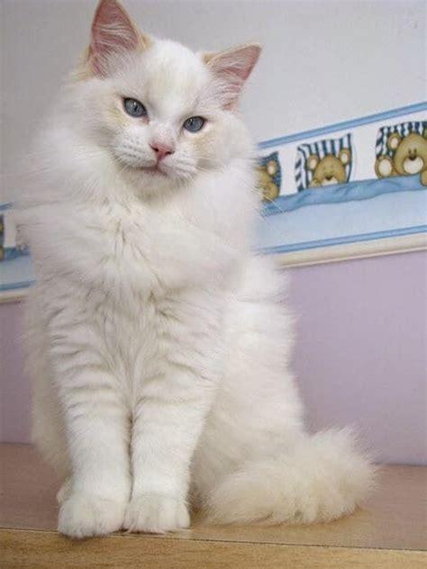 Grosir Kaos Pria Caterpillart Shirttshirt Caterpillar Putih jenis kucing ras yang paling lucu grosir kaos distro original bandung