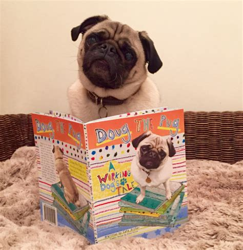 doug the pug book habri central members view carroll