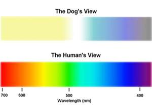 dogs color blind color blindness in