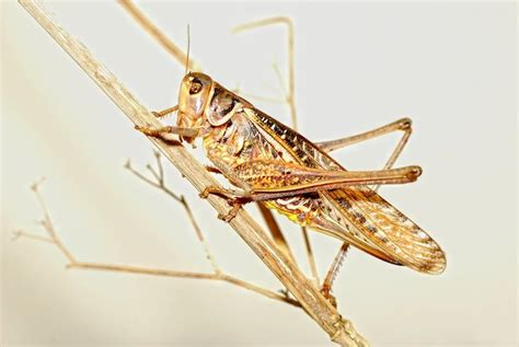 Mba In Entomology by Opportunities 2015 Can Consumers Be Convinced To Eat Bugs