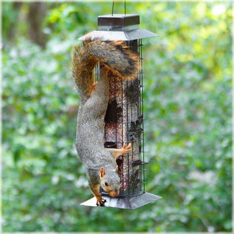 perky pet  squirrel proof wild bird feeder  sutherlands