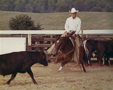 how to a cattle to work cattle cutting sport