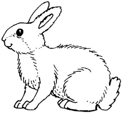 Cute Animal Rabbit Coloring Books Sheet For Kids Drawing Rabbit Color Pages