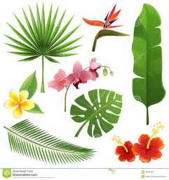 Tropical Foliage Plants Identification - tropical plants stock images image 33281804