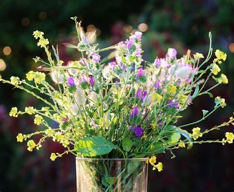 significato dei fiori amicizia fiore dell amicizia idee green