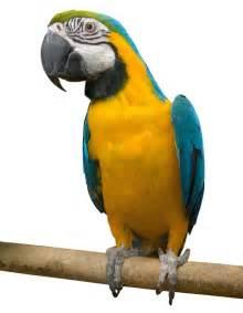 about birdtrader magazine online birdtrader
