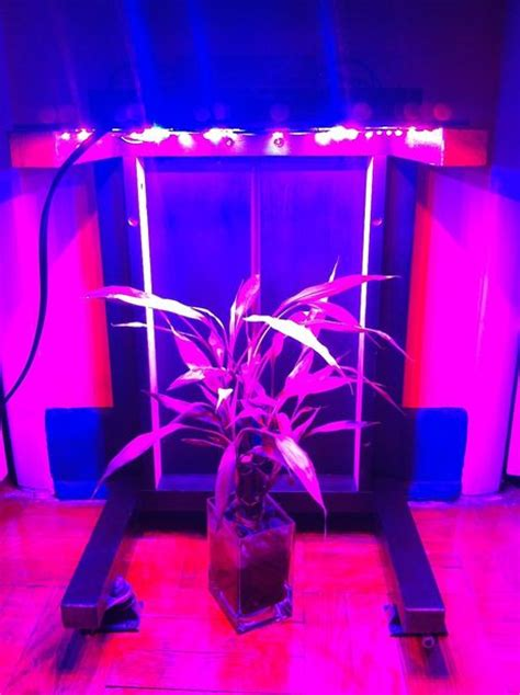 diy led grow lights  growing plants indoors home